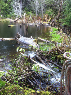Beaver pond formed on stream channel