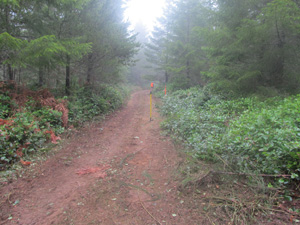 Trail cleared of scotch broom